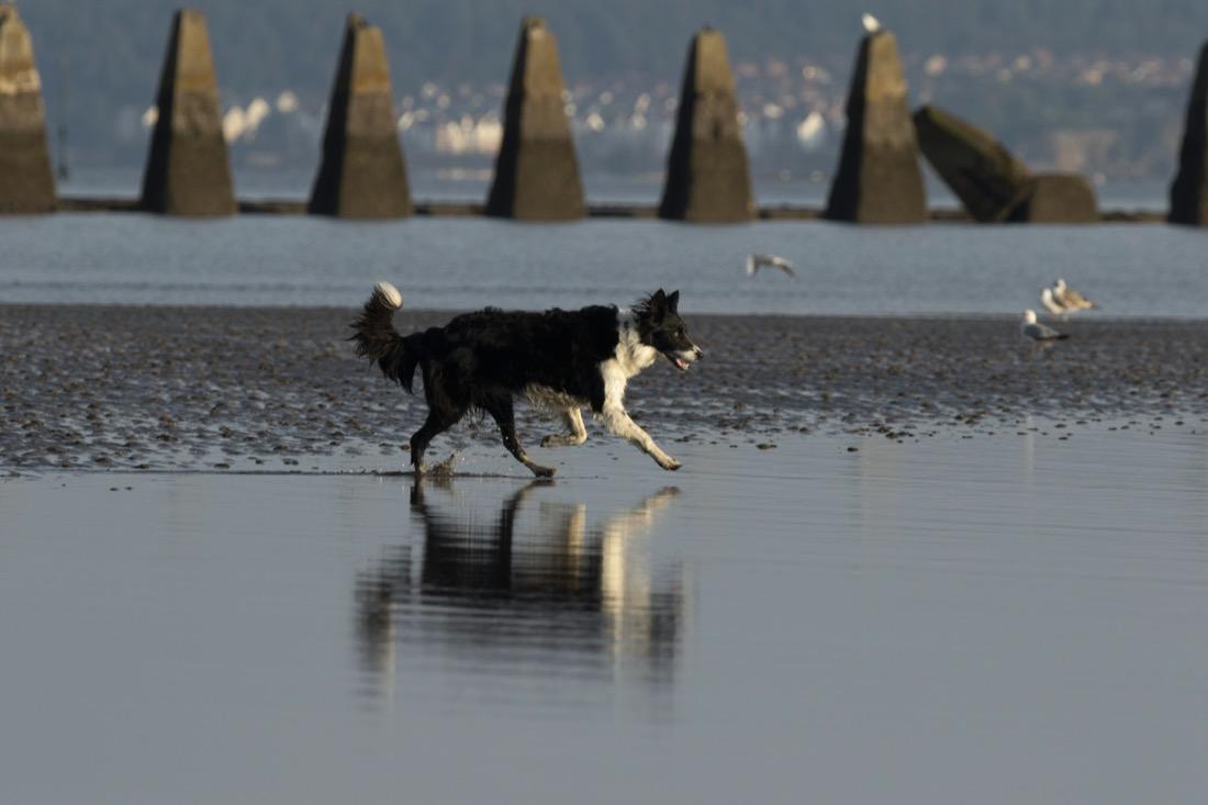 Cramond Beach Edinburgh Dog Walk Cramond Island
