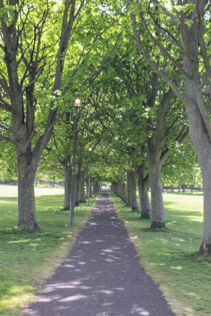 Tree Arch Meadows Park Nature Edinburgh Garden