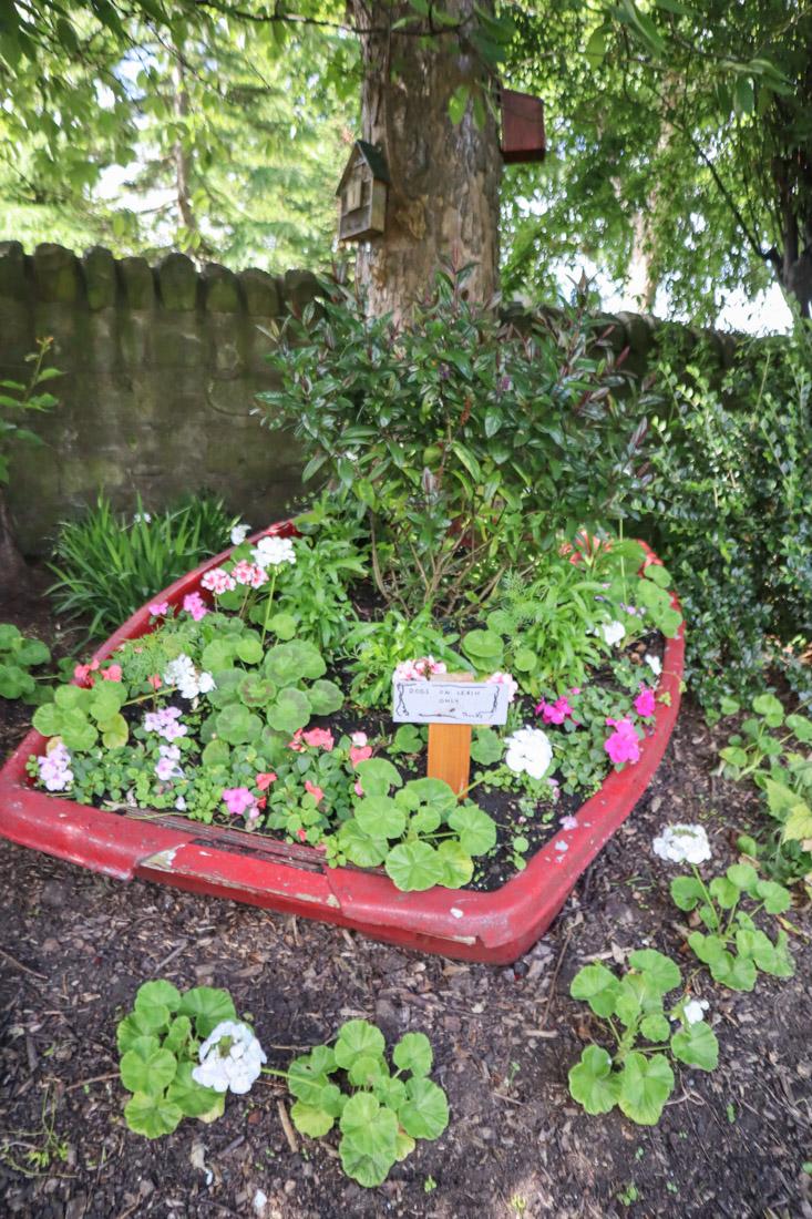Starbank Park Gardens Boat Flowers Nature_
