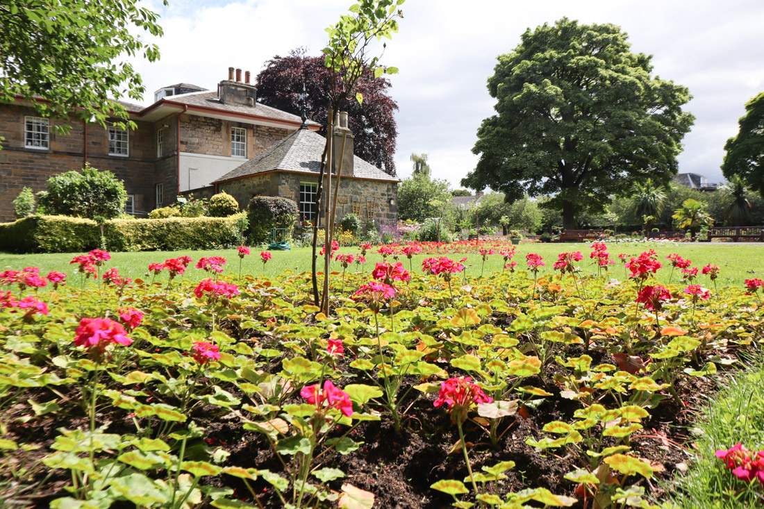 Starbank Park Gardens Roses Nature_