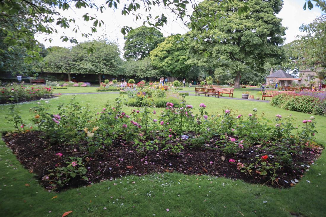 Starbank Park Gardens Roses_