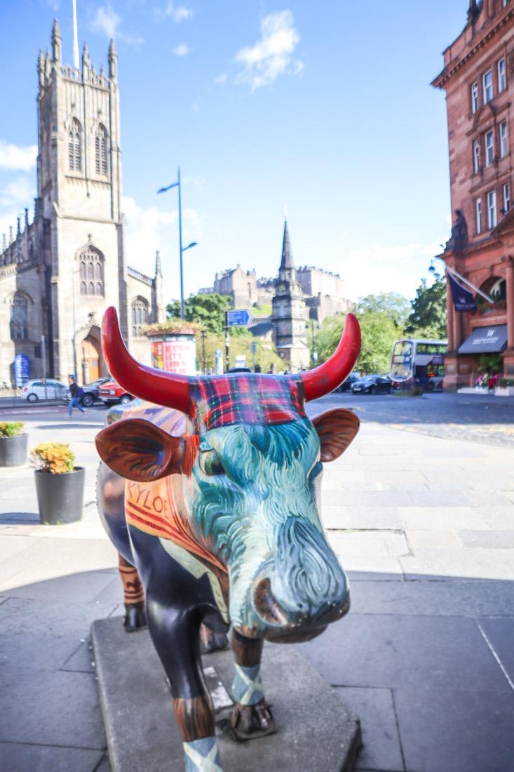 Highland Cow Art West End in Edinburgh