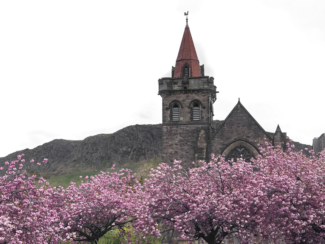 Building popping up from pink cherry blossoms with Arthur's Seat hill in background at Deaoness Gardens