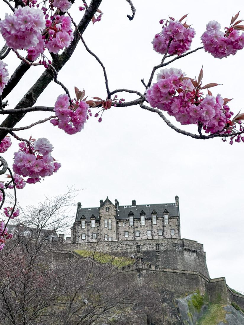 Edinburgh Castle on cliff framed by cherry blossom in spring