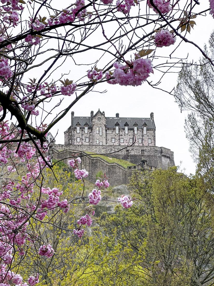 Edinburgh Castle Cherry Blossoms Spring season_