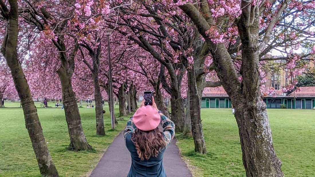 Meadows Park Cherry Blossom Gemma_