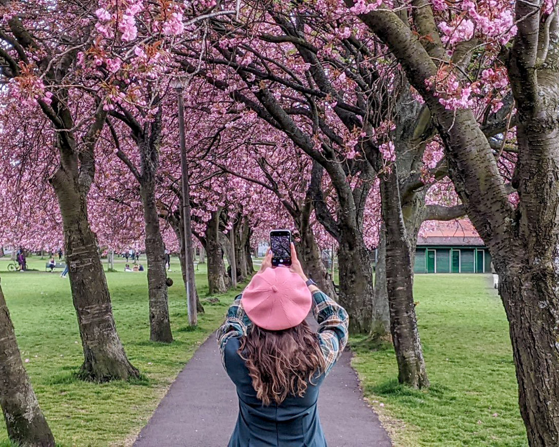 Gemma among the pink cherry blossom trees at the Meadows Park in Edinburgh