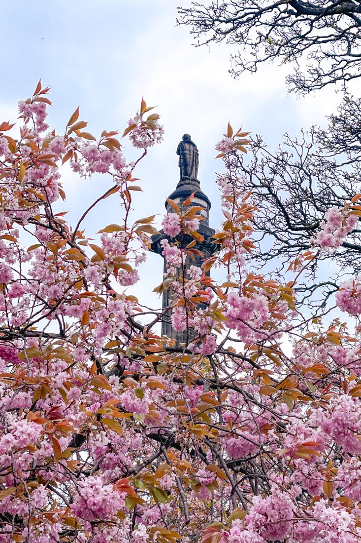 St Andrews Square Statue Cherry Blossom Tree Garden